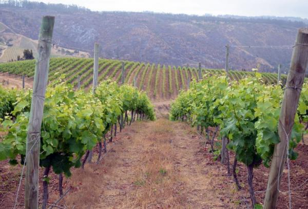 Take a tour of the vineyards at Casa Marin