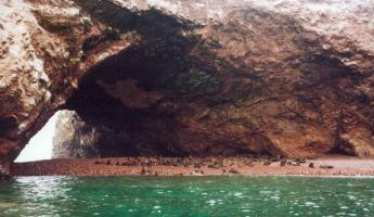 Sea lions on Paracas Peninsula