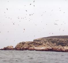 Birdlife on Paracas Peninsula