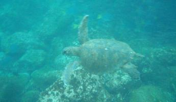 Sea Turtle! He ran away
