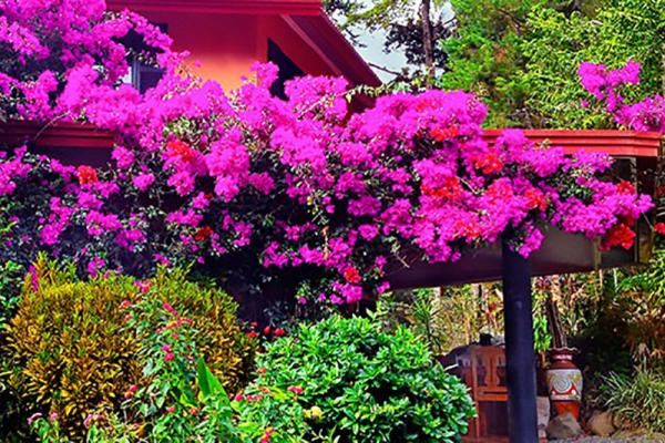Boquete Garden Inn's amazing bright flowers over the grounds
