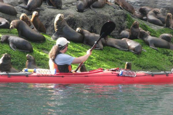 Kayaking by an island of sea lions