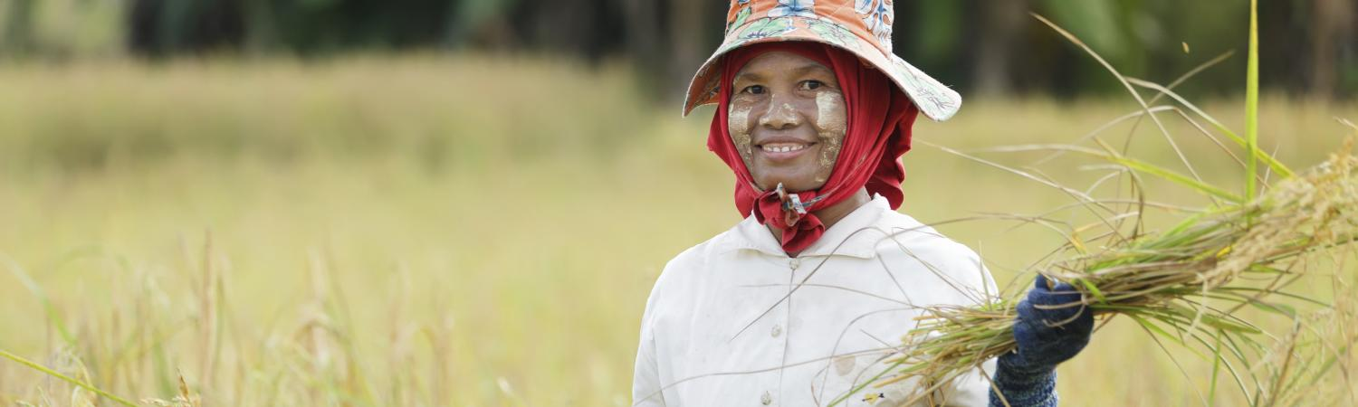 A local woman with thanaka paste on face farms for rice