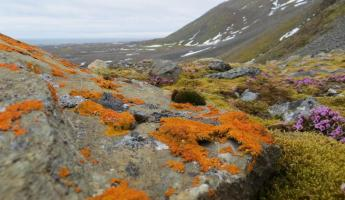 It may be sparse, but color comes to the Arctic too!