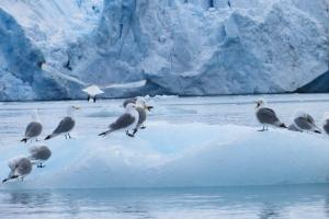 Birds play on icebergs in the Arctic.
