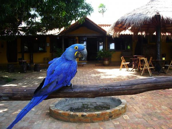 Befriend the many parrots which claim Araras EcoLodge as home