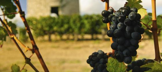 Taste the wines of the Bordeaux region of France