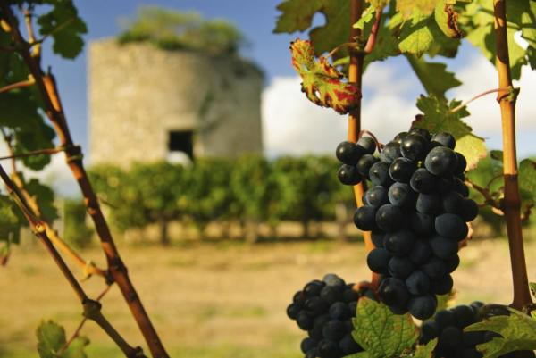 Taste the wines of France
