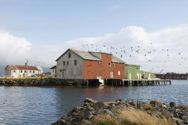 Birds soar above colorful buildings in the Norwegian fjords