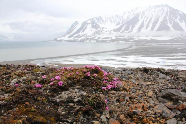 Bright wildflowers liven up the mountainous Arctic landscape