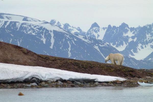 Keep your eyes out for polar bears on your Arctic voyage