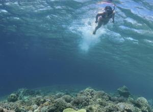 Snorkel along the Belizian reef