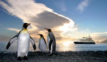 Penguins pose in front of the Sea Spirit