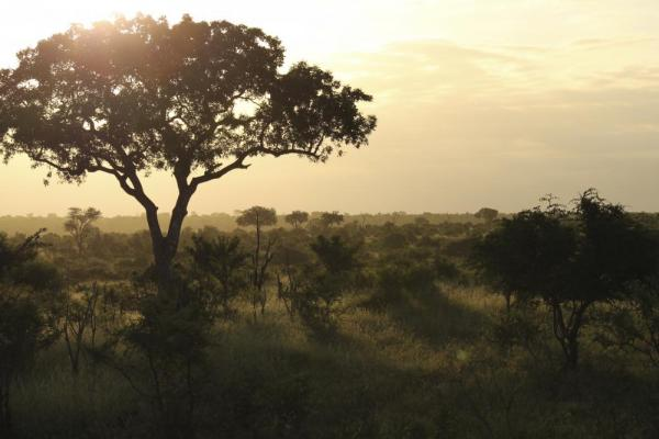 The sun sets over Kruger National Park