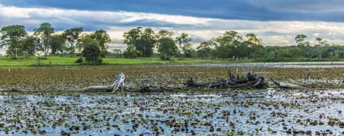 The beautiful and remote region of Pantanal, Brazil