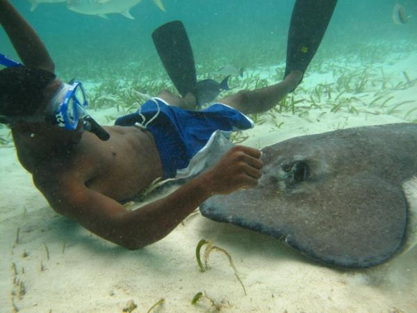 Snorkel with sting rays during your stay at Ramon's Village