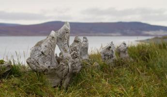 Whalebones sprinkle the Russian Arctic coast