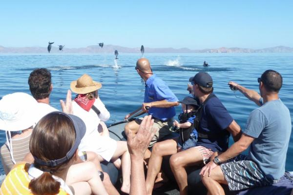 A skiff provides excellent marine life viewing!
