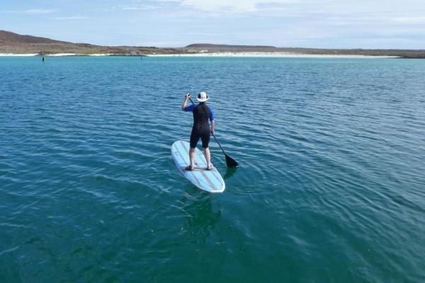 Practice your Stand-up Paddle Board skills in the Sea of Cortez