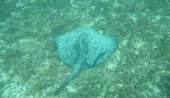 sting ray...i will not hug it