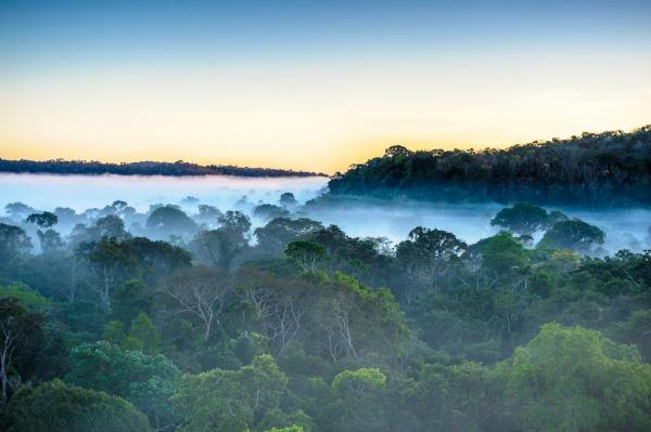 Mist settles over the jungle