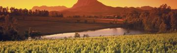 Sunrise above vineyards around Paarl, Western Cape, South Africa