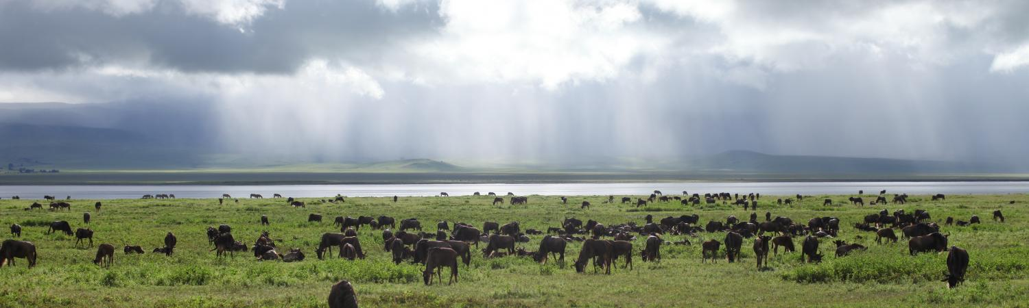 Wildife on the plains of Tanzania