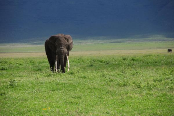 Elephant in Crater