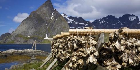 Drying stockfish on Lofoten, Norway
