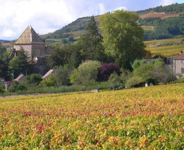 Vineyards and chateaus