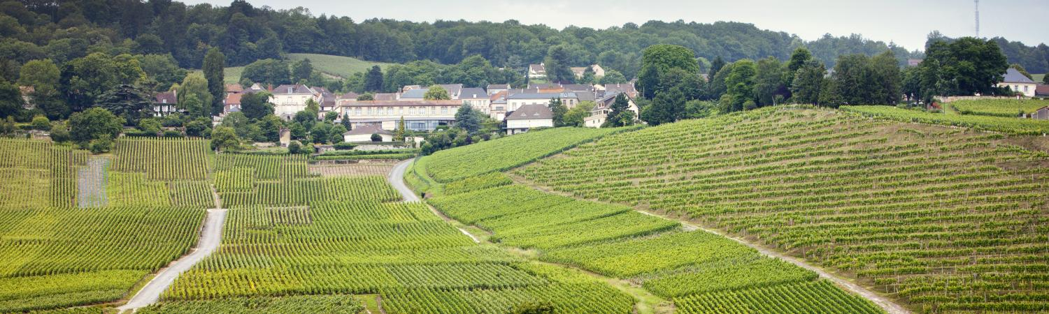 Sprawling vineyards of France