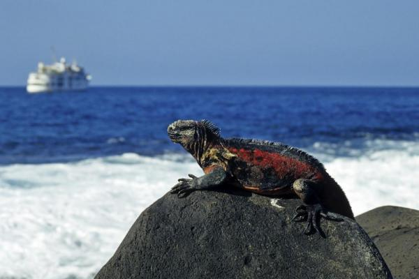 Marine Iguana with ship