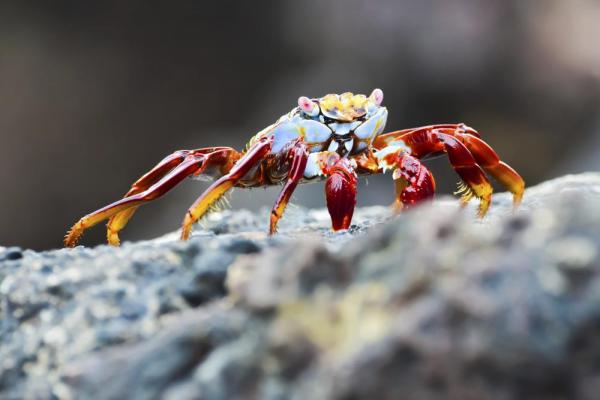 Crab on the rocks
