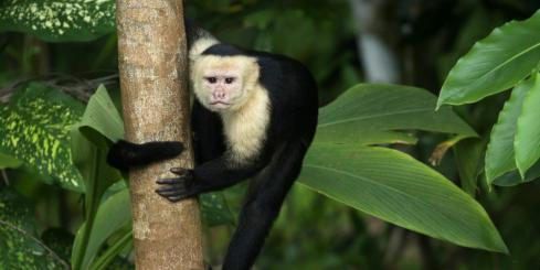 A monkey clings to the tree