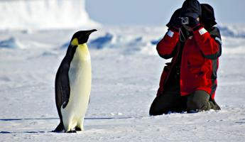 Penguin photo opp in Antarctica
