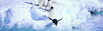 Penguin jump in Antarctica