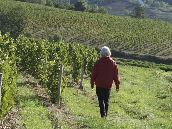 Walk through the vineyards of Europe