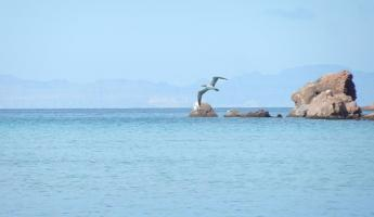 Blue footed booby on Espiritu Santo Island