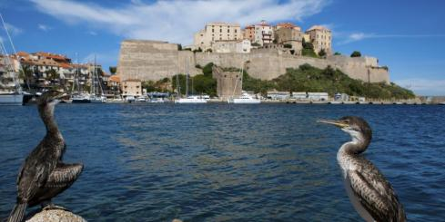 The medieval fortress of Calvi