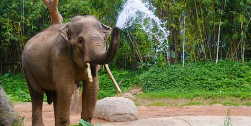 Thai elephant playing in the water