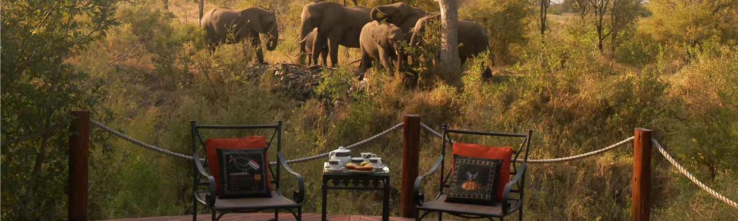 Elephants at HoyoHoyo Lodge