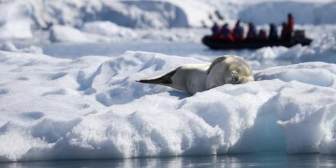 Seals in Antarctica with zodiac in background