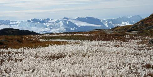 Late summer in West Greenland
