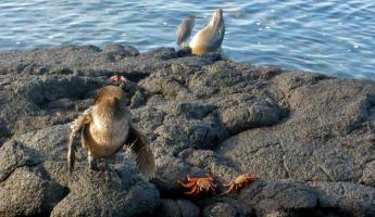 Just another animal sighting in the Galapagos