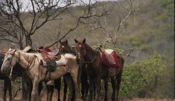 Horses waiting to go