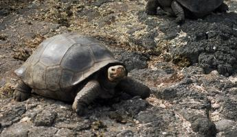 Encountering the wildlife of the Galapagos Islands