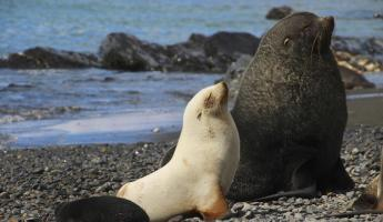 Observe beautiful fur seals
