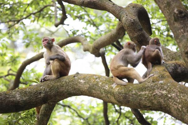 Monkeys in a tree