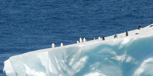 A group of penguins on an iceburg