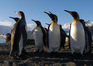A group of penguins enjoys the sunshine